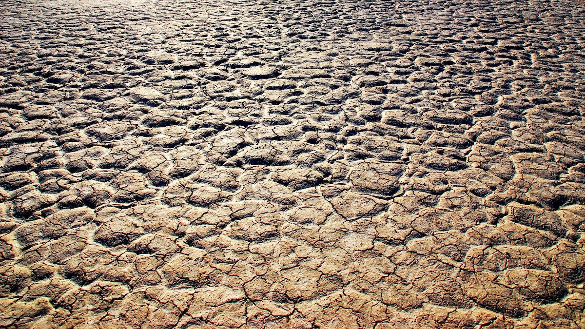 desertificazione, migrazioni climatiche, riduzione CO2